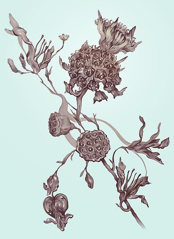 flora_-_illustration_kuvitus_karo_minna_niskanen